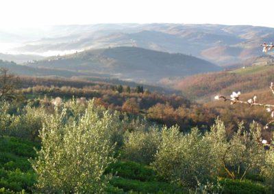 21 Casa Ercole olijfgaard
