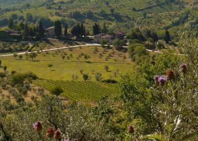 28 Masseto vanaf Montecastelli