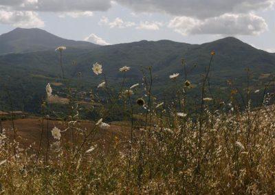18 Vivo Monte Amiata van weg Contignano