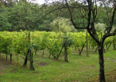 35. De wijngaard - Villa Nonni