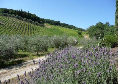 12 Setriolo nieuwe wijngaard