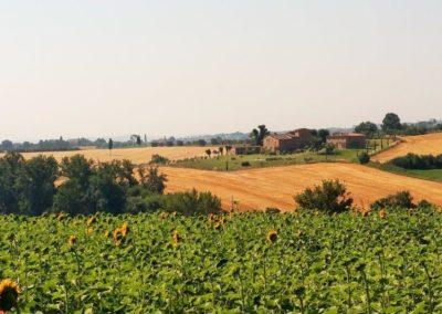 13 Il Borgo Cortona zonnebloemen met daarachter de borgo